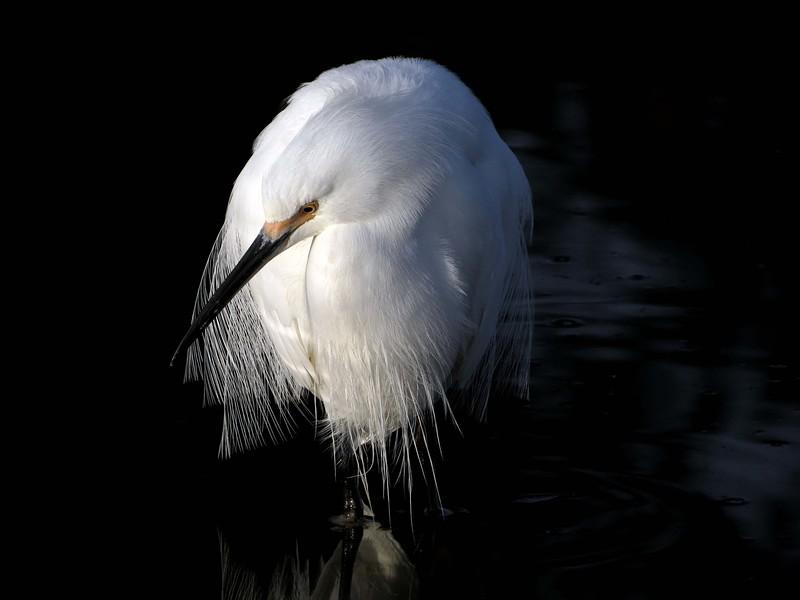 [Image: audubon2015tonybritton%20%2814%29-L.jpg]