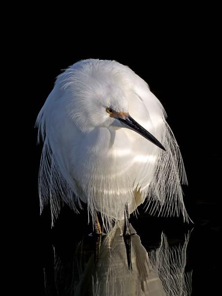 audubon2015tonybritton%20%2813%29-L.jpg
